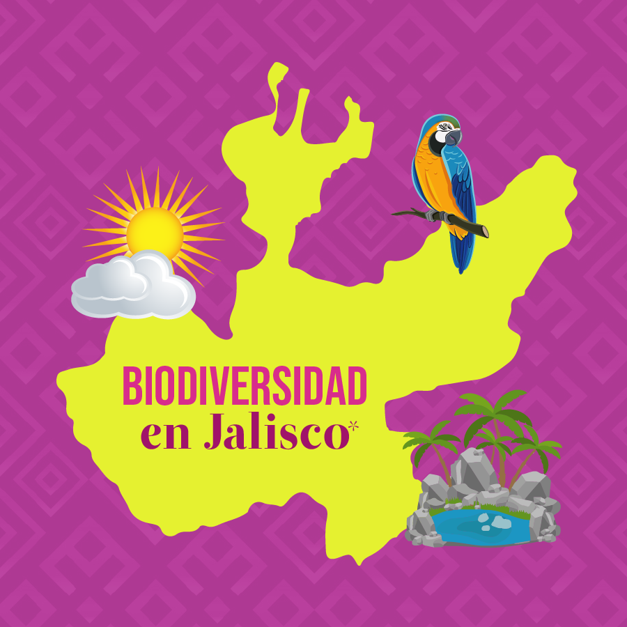Nota Jalisco